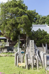 kawakami_03